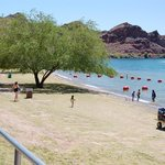 Shallow kids swimming area with shade tree