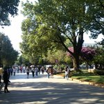 Shaded attractive campus