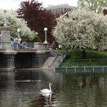 Public Gardens in the Spring