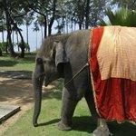 象のジャンボ