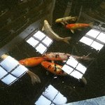 "Fish in the courtyard ""river"""