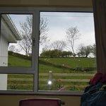 pecore al pascolo, questa è la vista dalla camera