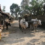Hotelparkside, chitwan