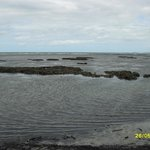 Cape Trib Muddy Dead Reef