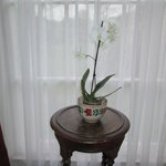 An orchid in our georgian window