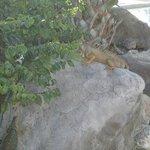 Iguana at pool area