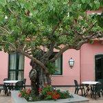 Alter Maulbeerbaum auf der Terasse