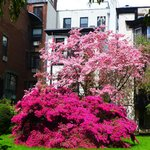 Photo of Brooklyn Heights