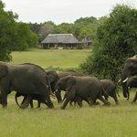 Elephants near lodge