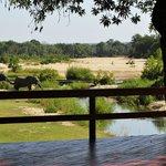 Elephants near deck