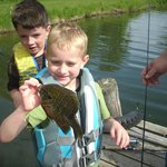 Kids Catching Panfish off the Dock