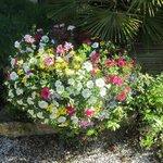 Blumen im Garten von LaFerme