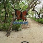 Mariposa diving center @ Pandan Island
