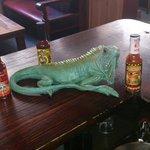 iguana wana