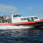 whale watching, historic Lighthouse/Saturna Winery tours from Gulf Islands, White Rock BC