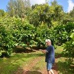 Steve Frailey, Hawaiian Organic Noni