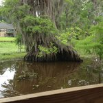 A beautiful relic on Caddo Lake