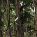 Wildlife on Caddo Lake