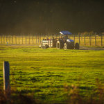 Hayrides across the fields