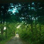Road to Blue Jay Farm