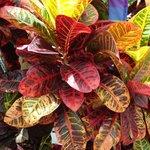 Colourful tropical gardens