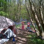 Our campsite in the bluebell filled woods!