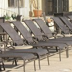 lots of pool lounge chairs