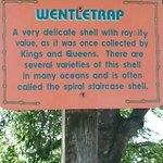 The Wentletrap