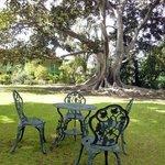 Backyard Moreton Bay Fig