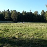 Campsite is ajacent to a beautiful expansive meadow.
