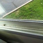Bugs on the window!!!!!