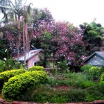 beautiful fauna and flora