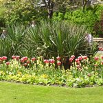 local Gardens to sightsee