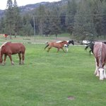 Horses going to evening pasture