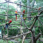 Parrot area