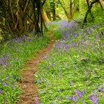 walk through the wood