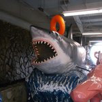 another view of the shark