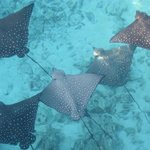 eagle ray by water villas