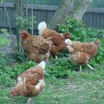 Lieferanten der Frühstückseier