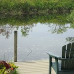 Cute Pond