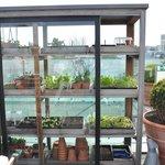 roof top fresh herbs