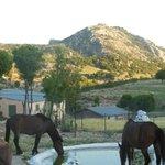 Farm ponies