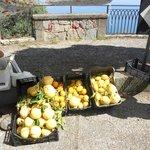 gigantic lemons!