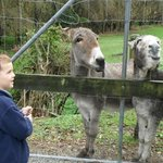 John Key the donkey and friends  (apologies to the PM)