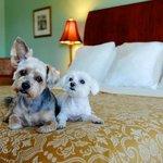 Premium Pet Friendly Room