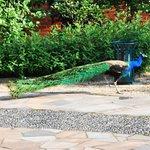 @ the gardens