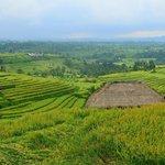 Rice Terraces on Alila Journey, near Jatiluwih