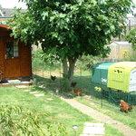 Fig Tree chicken farm