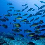 OCEAN INDIEN- BLUES