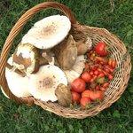 Mushrooms in Montemaggiore